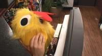Judd in his chicken suit
