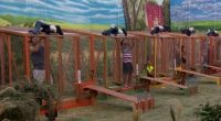 HoH comp in BB18 Week 11