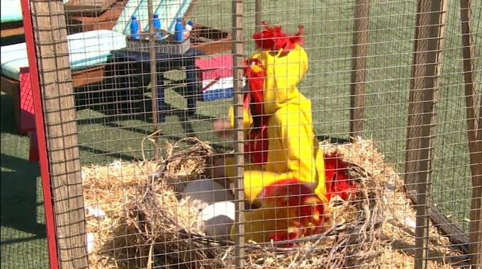 Analyse in her Chicken Coop